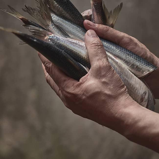 Wikingerschänke - Frischer Fisch aus der Region